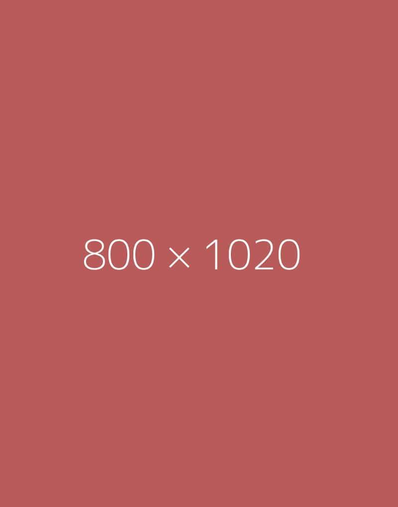 hongo-800×1020-e-ph